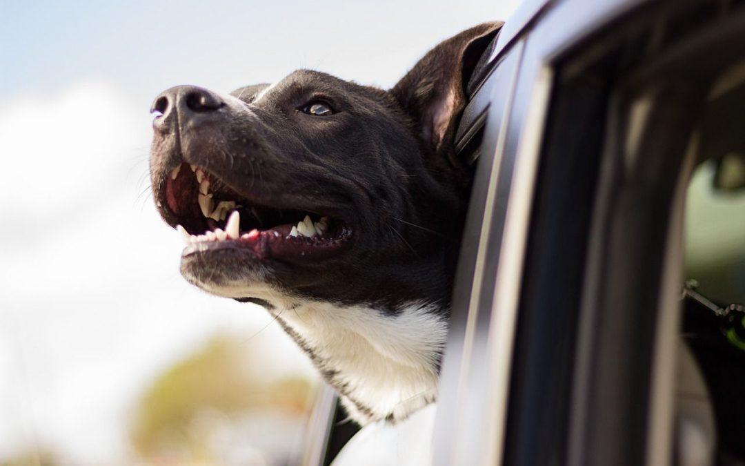 Cómo se lleva un perro en autocaravana